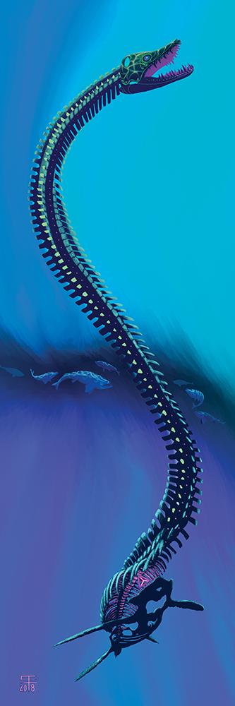 An Elasmosaurus spp. skeleton haunts the same waters as Enchodus spp.
