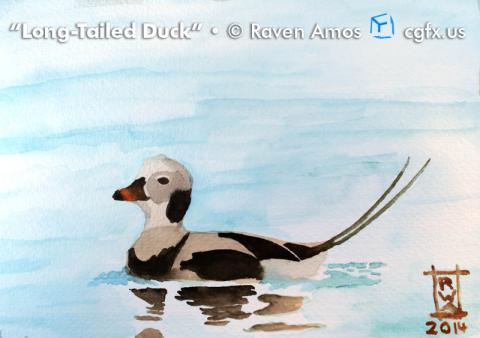 Long-tailed duck watercolor