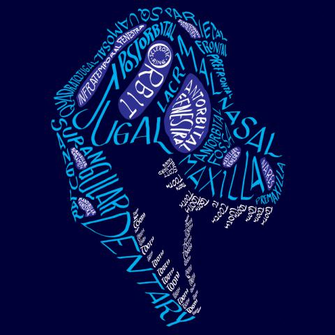 Calligraphy of the anatomical names of bones in the tyrannosaur skull, in color.