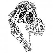 Calligraphy of the anatomical names of bones in the tyrannosaur skull.