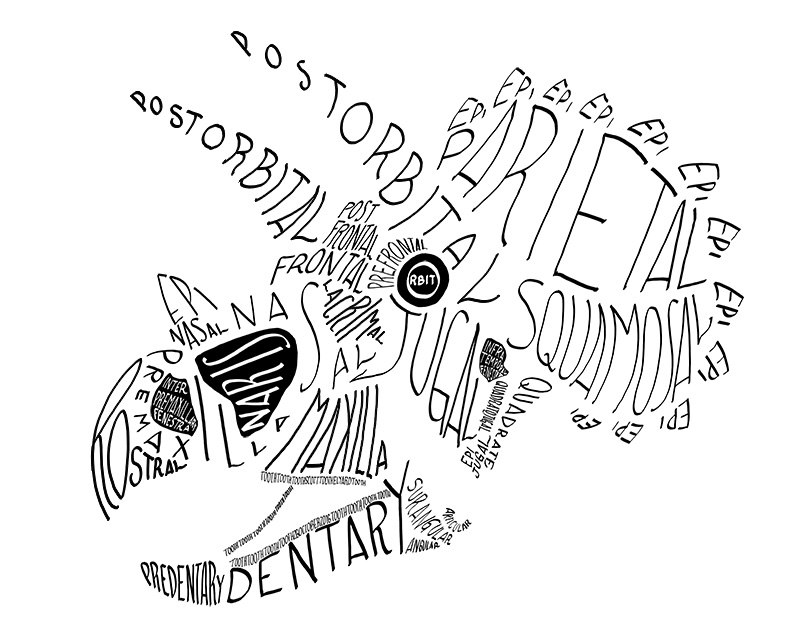 Calligraphy of the anatomical names of bones in the Triceratops skull, in monocolor.